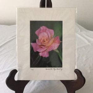 Single Pink Rose Photograph Signed & Numbered